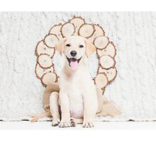 Lab Puppy with Christmas Wreath On a Cable Knit Blanket -Animal Rescue Portraits Photographic Print