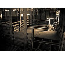 Where did all the sheep go? Photographic Print