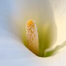 Calla Lily by Glenda Williams