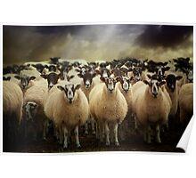 Sheepfest Poster
