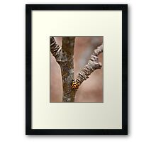 Because It's There Framed Print