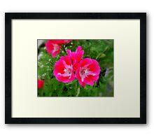 Striking Pink Framed Print
