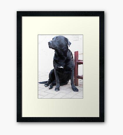 Best companion Framed Print