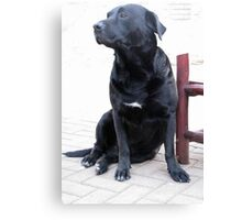 Best companion Canvas Print