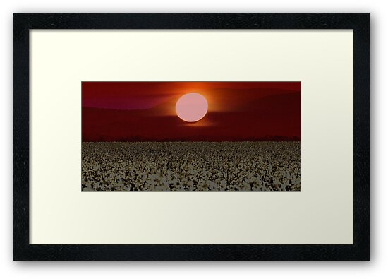 Carolyn's Red White Canola Moon by Maree Cardinale