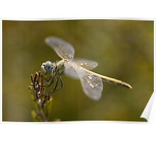 Dragonfly THi Poster