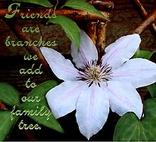 Clematis On Trellis by Sandra Foster