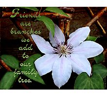 Clematis On Trellis Photographic Print