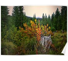 Fall In The Cascades Poster