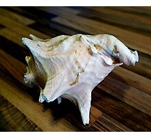 Sea Shell, Ireland Photographic Print