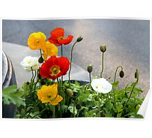 Poppies & Babies Poster