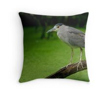 Black Crowned Night Heron Throw Pillow