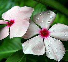 Flower Droplets by Deborah Crew-Johnson