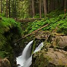 Sol Duc Falls by Barbara  Brown