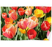Tulip Crossing Poster