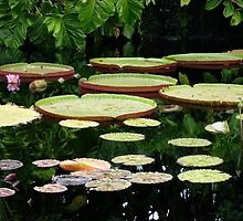 Lily Pads by flyingartgarden