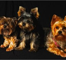 My dogs 1 by Trevor Murphy