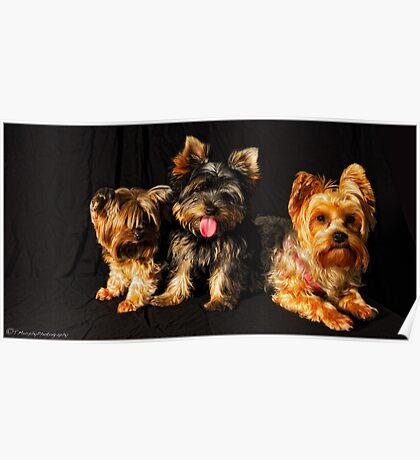 my dogz 2 Poster
