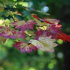 The leaves are turning by John Dalkin