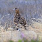 Yorkshire: The Famous Grouse by Rob Parsons