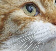 Garfield Lookalike Sticker