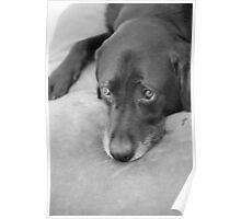 Melancholic dog Poster