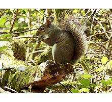Squirrel on a Branch Photographic Print