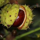 Chestnut by karina5