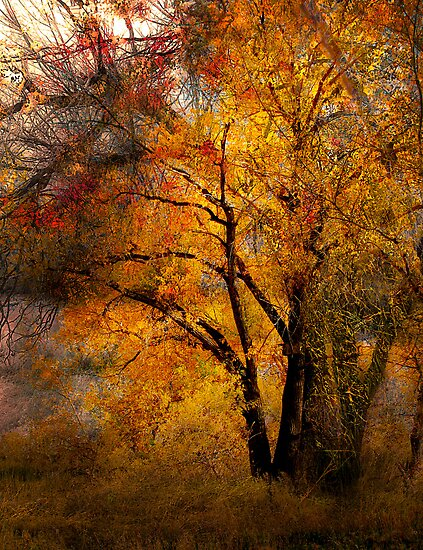 1959 by peter holme III