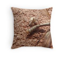 A spider eating a crane fly. Throw Pillow