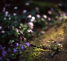 Windflowers by SkinkArt
