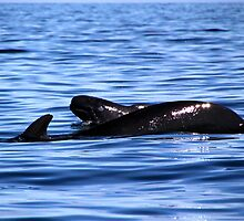 Pilot Whale ... Mama and Calf by Peggy Berger