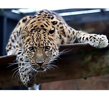 Special Leopard Cat Photographic Print