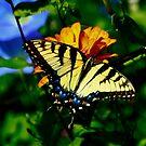 Colors Aplenty by Brenda Burnett