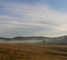 Fog in the Valley by BarbWireNRoses