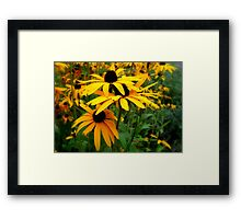 A Bed Of Sun Framed Print