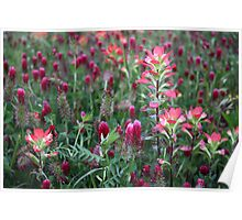 Paintbrush And Red Clover Poster