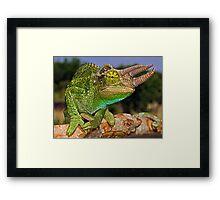 Jackson's Chameleon Framed Print