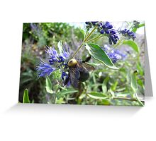 Rumble Bumble Greeting Card