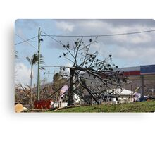 Flame Tree bent by winds from Cyclone Yasi - Cardwell Foreshore, North Queensland, Australia Canvas Print