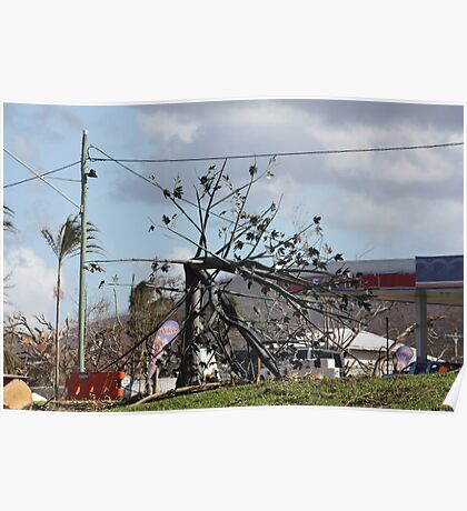 Flame Tree bent by winds from Cyclone Yasi - Cardwell Foreshore, North Queensland, Australia Poster