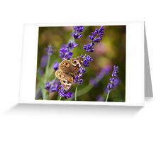 Lavender Landing Greeting Card
