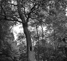 Tree with a Mysterious Hole by Artberry