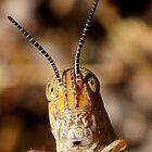 Grasshopper by Betsy  Seeton