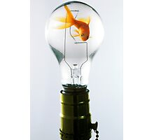 Goldfish in light bulb  Photographic Print