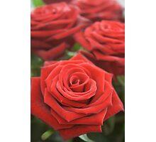 Birthday Roses Photographic Print