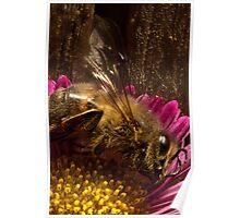 Studio Shot: European Bee Poster