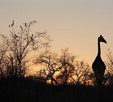 Sabi Sabi - Giraffe Silhouette by Samantha Bailey