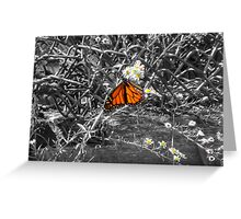 The Monarch Greeting Card