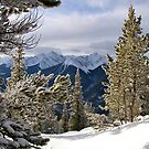 Winter Paradise by Mark Iocchelli